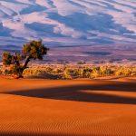Tree-in-Desert-Morocco-Unsplash